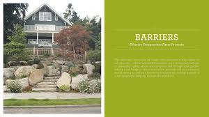 landscaping for privacy buffers barriers and screens u2014 timber press