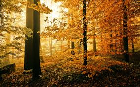 autumn day in the woods wallpaper hd desktop wallpaper