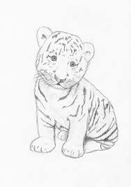 drawn tiger baby tiger pencil and in color drawn tiger baby tiger