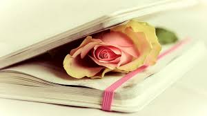 Flowers In A Book - 3 facts about st valentine u0027s day in spain