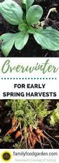 624 best gardening in fall u0026 winter images on pinterest veggie