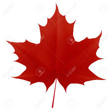 Maple Leaf Square Floor Plans Red Maple Leaf Images U0026 Stock Pictures Royalty Free Red Maple