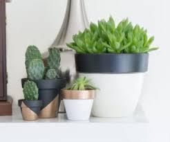 hairy funny ceramics plant pots