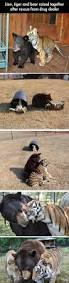 434 best cute images on pinterest animals country life and farm