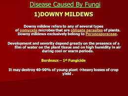 Types Of Plant Disease - plant disease ppt download
