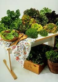 10 best vegetable gardening tips