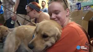 Why Are Flags At Half Mast In Florida Today Florida Shooting Comfort Dogs Offer Support To Community