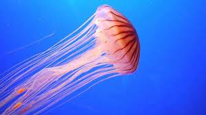the biggest misunderstandings about evolution u2014 steemit