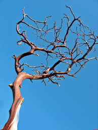 manzanita branches for sale 28 manzanita branches for sale wedding items for sale home