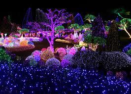 garden of lights hours celebrate korea winter s lighting festival at garden of morning calm