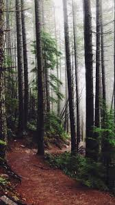 forest woods path pine trees iphone 8 wallpaper download iphone