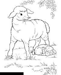art sheep color