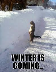 Winter Meme Generator - envious cat weknowmemes generator