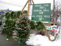 christmas trees on sale history of christmas trees and ornaments tiny toes