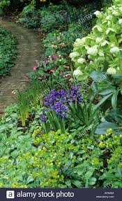 woodland path mixed planting with hellebores early spring garden