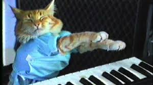 Cat Playing Piano Meme - piano cat blank template imgflip