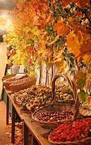 Pinterest Harvest Decorations Best 25 Autumn Harvest Ideas On Pinterest Harvest Time Harvest