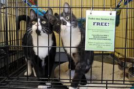 black friday pet adoption richmond animal league test page