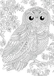 coloring page for adults owl owl coloring pages coloring pages of owls for adults owl colouring
