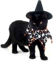 adorable cat halloween costumes