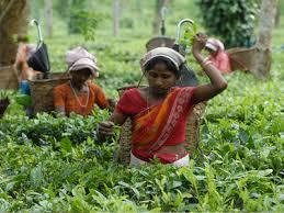 Seeking Tea Sarbananda Sonowal Tea Plantation Workers Stage Rally Protesting