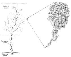 How Do The Eastern Lowlands Differ From The Interior Lowlands Lecture Notes On The Major Soils Of The World