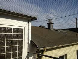 taubenabwehr balkon katzennetze nrw die spezialisten wenn es um katzennetz anbringen