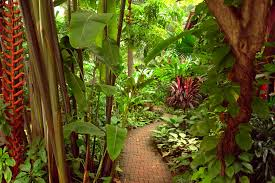 a detail of the lush tropical garden surrounding the home and