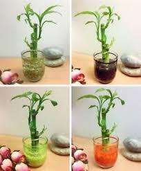 plante de bureau feng shui plante de bureau feng shui 100 images l du feng shui fémini