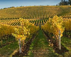 Washington Wineries Map by Washington County Vineyards And Farms Travel Portland