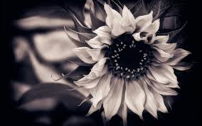 black flower black and white flower wallpaper c087b ch20 webmaster