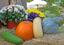 easy to grow veggies grow gourds balcony garden web