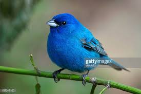 Arkansas birds images Bird stock photos and pictures getty images