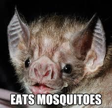 Bat Meme - good guy bat memes quickmeme