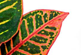 List Of Tropical Plants Names - tropical plants list