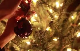 most popular christmas tree lights world s most popular christmas tree is also home to a tarantula