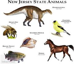 New Jersey wildlife images Wildlife art state animals jpg