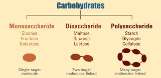 carbohydrates sources and importance