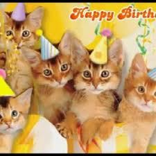 Happy Kitten Meme - tag for happy birthday cat happy birthday kitten meme rick p how