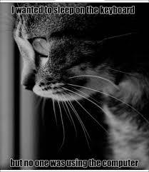 Depressed Cat Meme - depressed cat meme by raveneitor ze memedroid