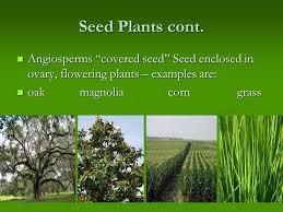 kingdom plantae ppt video online download