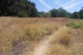 non native plants in california invasive species in california state parks