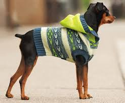 how to crochet a sweater tips and tricks to keep your pet warm