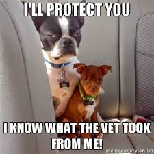 Boston Terrier Meme - boston terrier protection imgur