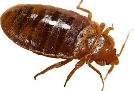 How To Kill Bed Bugs At Home Jri Kill Bed Bug Instantly Powerful Technology Kills Bugs Fast