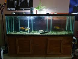 100 gallons aquarium size aquarium ideas pinterest 100