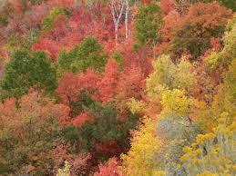 autumn sedona arizona creates golden colors fall
