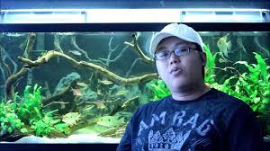 my top 3 aquarium driftwood youtube