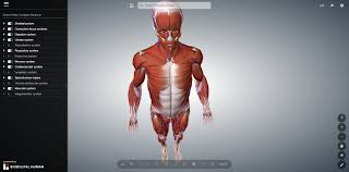 Apologia Human Anatomy And Physiology Sheppard Software Health Anatomy Cell Choice Image Learn Human
