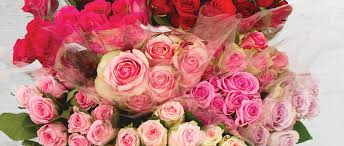 Meaning Of Pink Roses Flowers - 8 rose colour meanings the koch blog